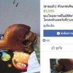 Сотни частей птиц, находящихся под угрозой исчезновения, продаются на Facebook