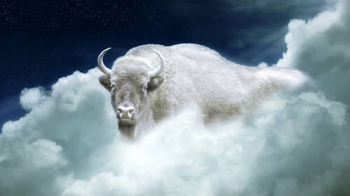 белый бык