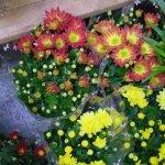 Список эффективных двенадцати комнатных растений, которые очищают воздух
