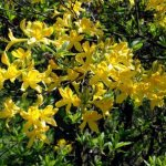 Глобальное потепление приносит преждевременное цветение