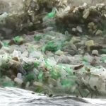 Море просит спасения