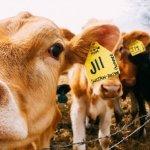 ООН предлагает сократить потребление мяса для решения проблемы изменения климата