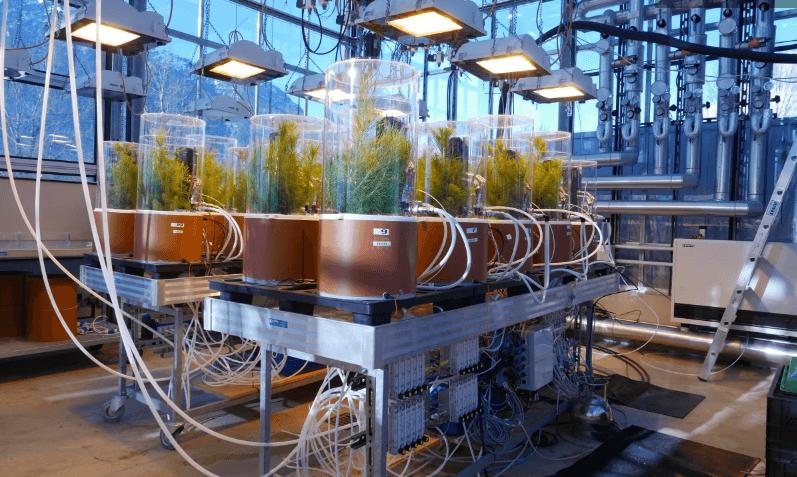 исследования лаборатория - деревья