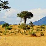 Глобальное потепление  способствует распространению лесистых растительных покровов в саванне и тундре