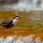 Исследование показывает первые признаки речной пластмассы, путешествующей по пищевой цепи