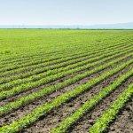 Рассеивание каменной пыли на посевах может поглотить миллиарды тонн CO2