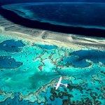 Большой Барьерный риф потерял половину своих кораллов за 20 лет