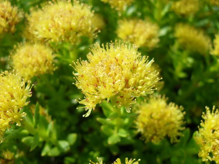 цветы опыление