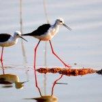 Антропогенный шум и ночное освещение влияют на жизнь птиц