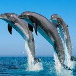 Изменение климата приводит к поражению кожи дельфинов