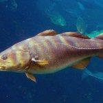 Как потепление влияет на обитателей морей - показывают исследования