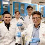 Биоразлагаемые губки из пыльцы растений могут впитывать разливы нефти