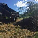 Восстановление сельскохозяйственных угодий тропических лесов кофейной мякотью