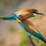 Почему птицы любят богатых