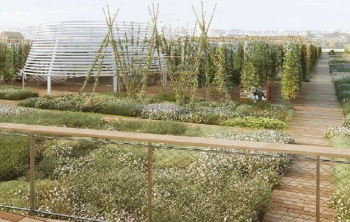 сад на крыше 2