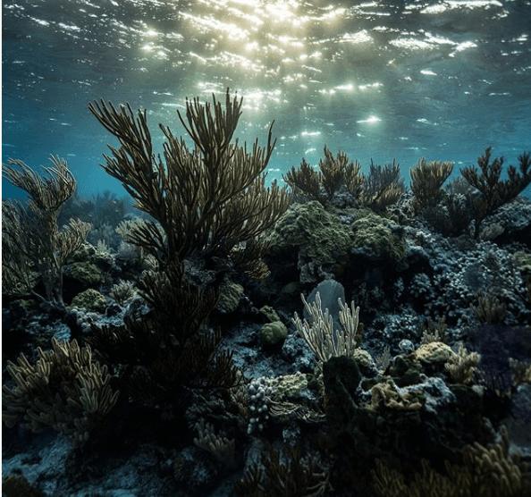 океан дно
