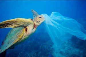 черепаха запуталась в пластиковом пакете и умерла