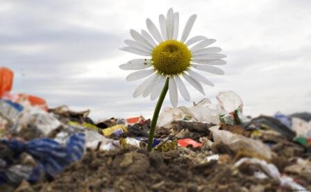 Цветок, выросший на мусорной свалке