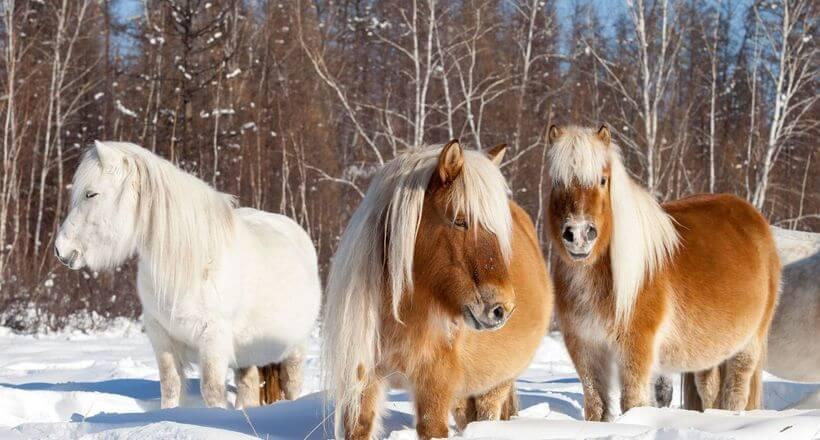 лошади и вечная мерзлота