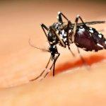 Изменение климата ускоряет распространение болезнетворных комаров