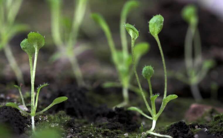 растение нанопластик 2