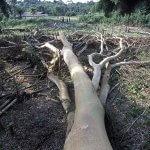 Почему экологические проблемы могут быть причинами эпидемий