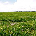 Как биологические инвазии могут вызвать экологические бедствия