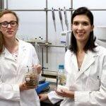 Исследователи открыли процесс производства бумаги из пищевых отходов