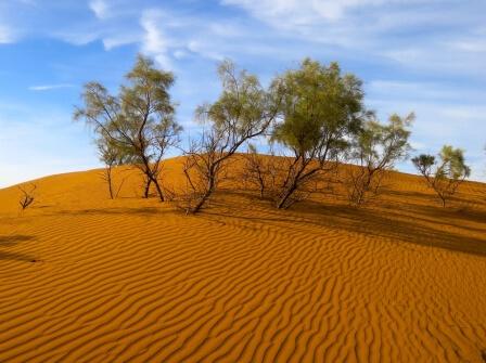 деревья в пустыне
