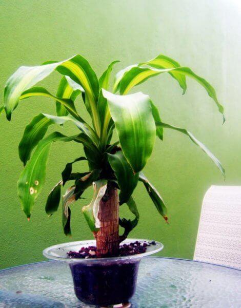 растение 3