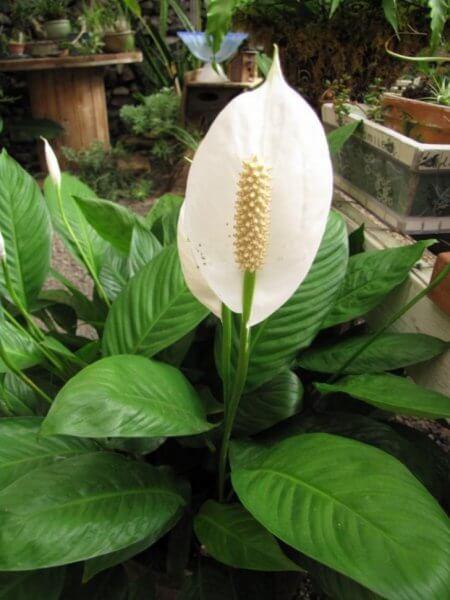 растение 5