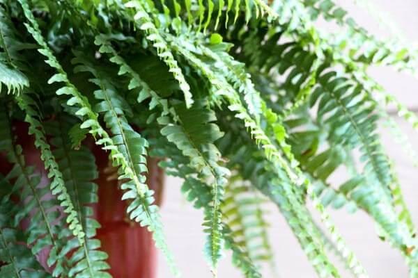 растение 7