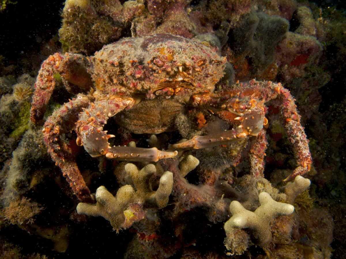 крабы рифы