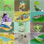 Энтомологи провели глобальное исследование вымирания насекомых