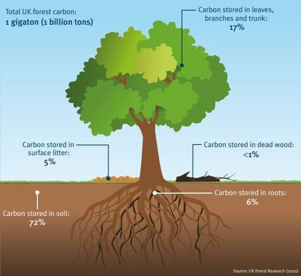 дерево-почва-углерод