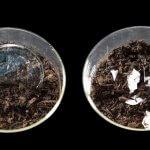 Найден новый эффективный метод разложения пластиковых отходов