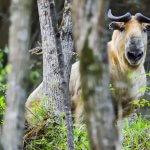 Саммит по биоразнообразию дает Китаю шанс стать лидерами
